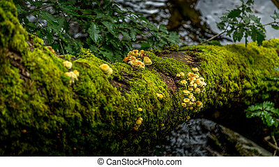 Wild fungi growing alongside Buttermere, Lake District UK -...