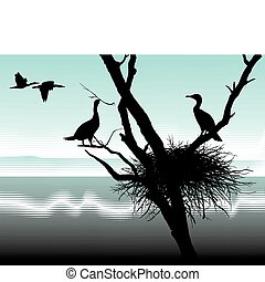 Cormorants at nest - illustration cormorants nest in the dry...