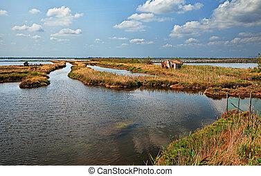 landscape of the Po Delta Park in Rosolina, Rovigo, Veneto,...