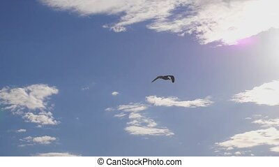 Seagull flying in the sea. Beautiful sun over the sea, sun...