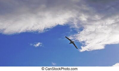 Seagull bird flying in the sea in slow motion. Beautiful sun...