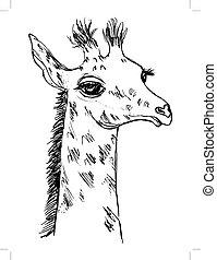 cute giraffe cub - vector, sketch, hand drawn illustration...