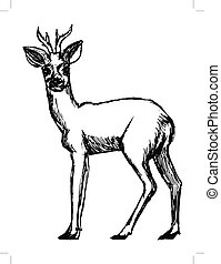 roe deer from forest - vector, sketch, hand drawn...