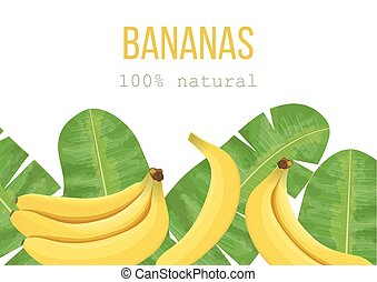 Bananas and tropical palm leaves, dense jungle. Vector...