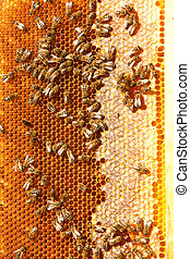 Worker bees - The bees are working selflessly