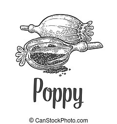 Poppy heads and seeds. Vector black vintage engraved - Poppy...