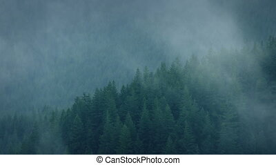 Mist Rolling Over The Wild Forest - Forest on cloudy day...