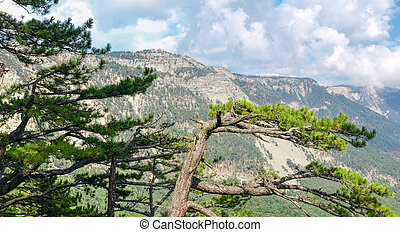 Hillside of the table hill with pines on a foreground -...