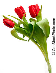 tulips - bouquet of beautiful red tulips