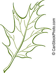 Leaf of oak Iberian, vector