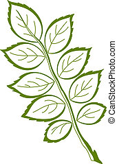 Leaf of dogrose, vector