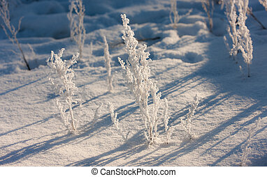 plants in a frost