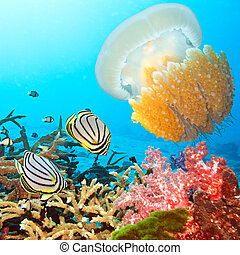 Butterflyfishes and jellyfish - Underwater landscape with...