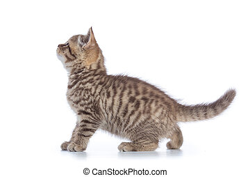 Cute kitten standing profile side view over white background...