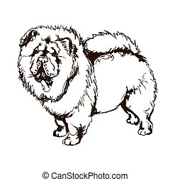 Illustration of dog breed Chow-Chow - Vector black and white...