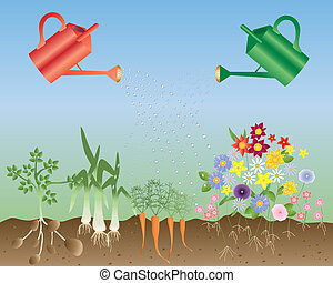 flowers and vegetables - an illustration of two watering...