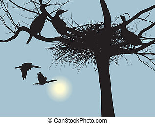 Nesting cormorants - illustration cormorants nest in the dry...