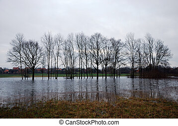 flooded wally with trees