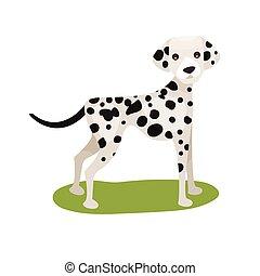 Dalmatian dog, purebred pet animal standing on green grass colorful vector Illustration