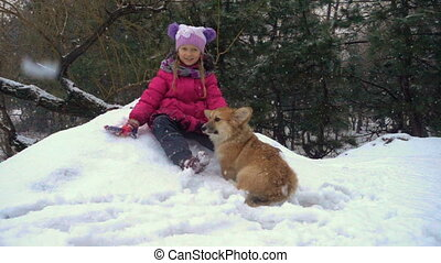funny corgi fluffy puppy walking with little girl outdoors...