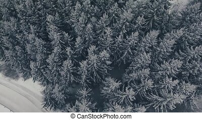 Aerial view of road in coniferous forest in winter. - Aerial...