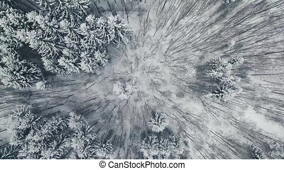 Aerial view of forest in winter. - Aerial view of trees...