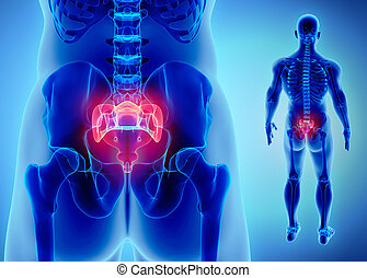 3D illustration of Sacral Spine, medical concept. - 3D...