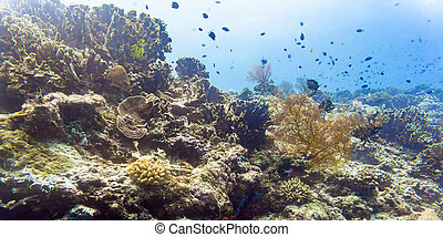 Coral reef and fish in tropical sea underwater as a...