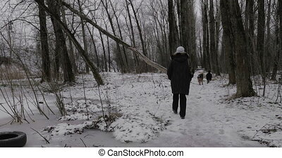 Woman and stray dogs in winter park - Woman walking in...