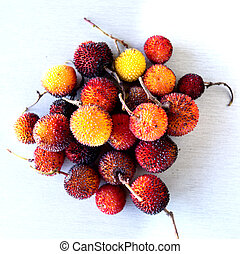 Arbutus Berry Fruit - Edible red berries of the arbutus tree...