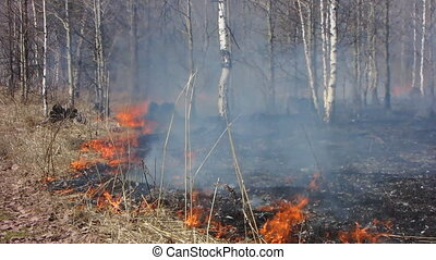 Forest fire 15 - Fire in the dry grass field.