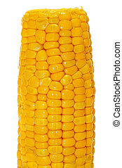 corncob - closeup of a cooked corncob isolated on a white...