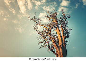 Lonley tree on clean blue sky background - Lonley tree on...