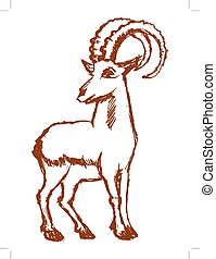 strong mountain goat - vector, sketch, hand drawn...