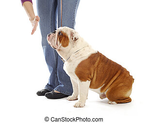 obedience training dog - hand of person giving the stay...