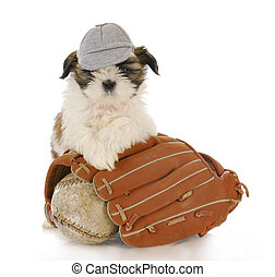 sports hound - shih tzu puppy with baseball glove and ball...