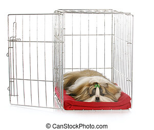 puppy in a crate - shih tzu puppy laying in open dog crate...