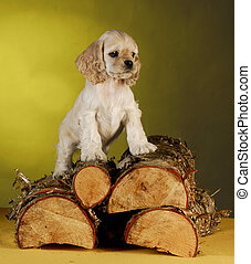 puppy standing on wood pile - cocker spaniel puppy climbing...
