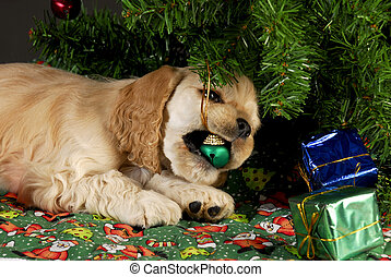 bad christmas puppy - cocker spaniel puppy chewing on...