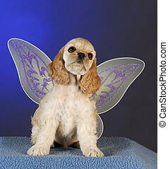puppy angel - cocker spaniel puppy with angel wings on blue...