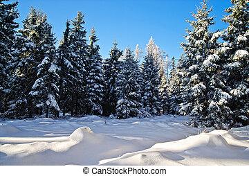 Winter Forest in Austria