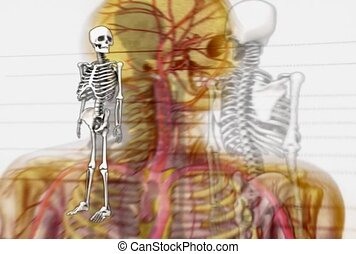 science, human, skeletal system