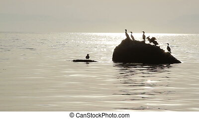 Silhouette of birds sitting on the stone in the water -...