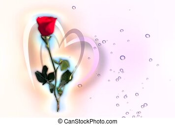 rose, romantic, love