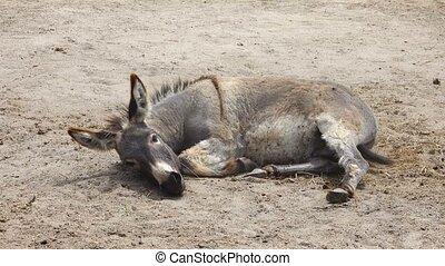 burro on a farm