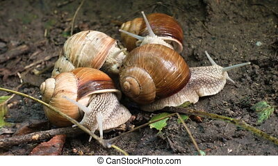 several snails sliding on the ground at the park