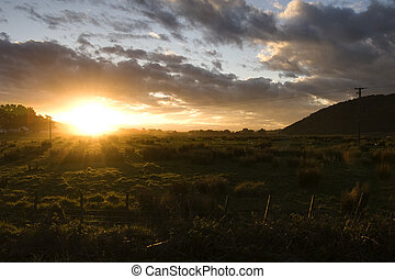 curio bay field - Sunset over sheep field, curio bay, new...