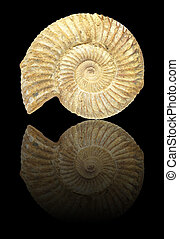 Ammonite - Well preserved fossilization of an extinct...