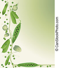 peas in a pod - an illustration of peas in a pod on a green...