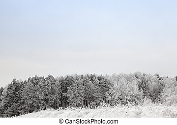 Winter season. Photo - photo of trees whose branches are...